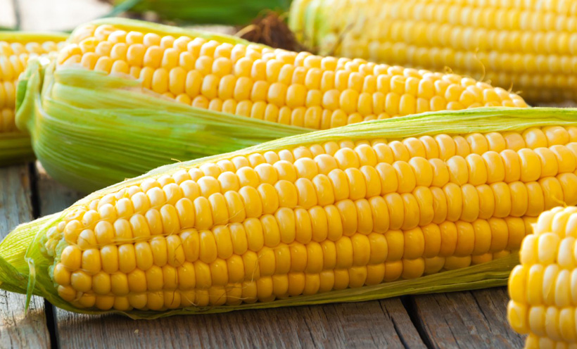 Iran, the sixth corn importer in the world